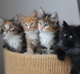 Housebreaking Cats And Kittens
